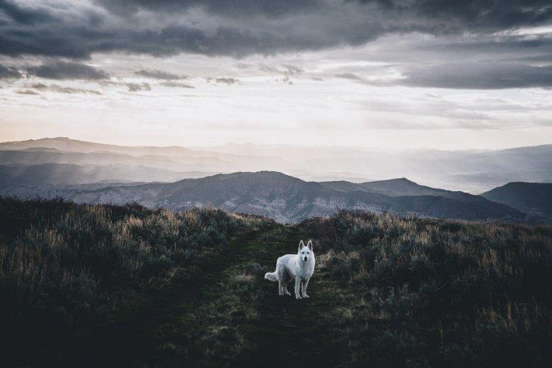 ein weißer Hund auf einer Wiese unter dunklen Wolken